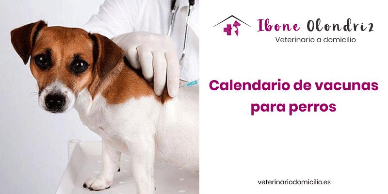 Vacunas para perros: Todo lo que debes saber